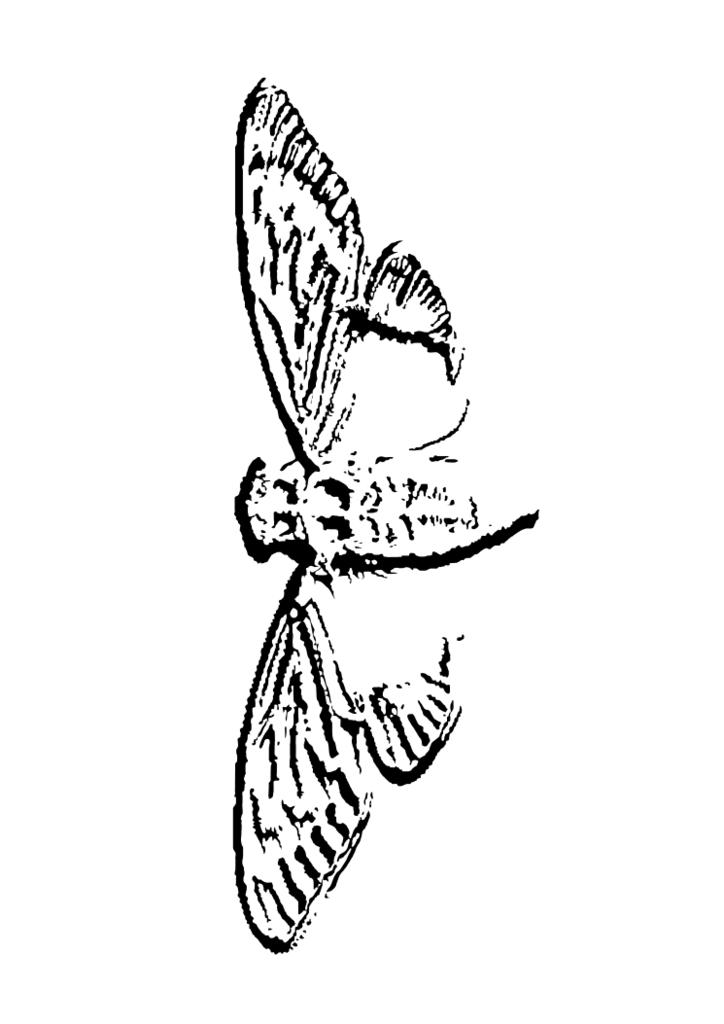 cicada-vector-5